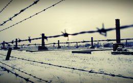 Ogrodzenie drut kolczasty Auschwitz-Birkenau