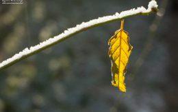 ostatni jesienny liść