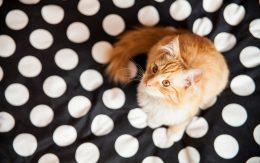Rudy kot na pościeli
