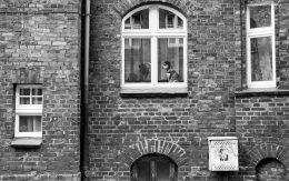 pies-w-oknie-Nikiszowiec