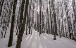 Las w drodze na Tarnicę