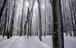 Las w zimowej scenerii - Ustrzyki Górne